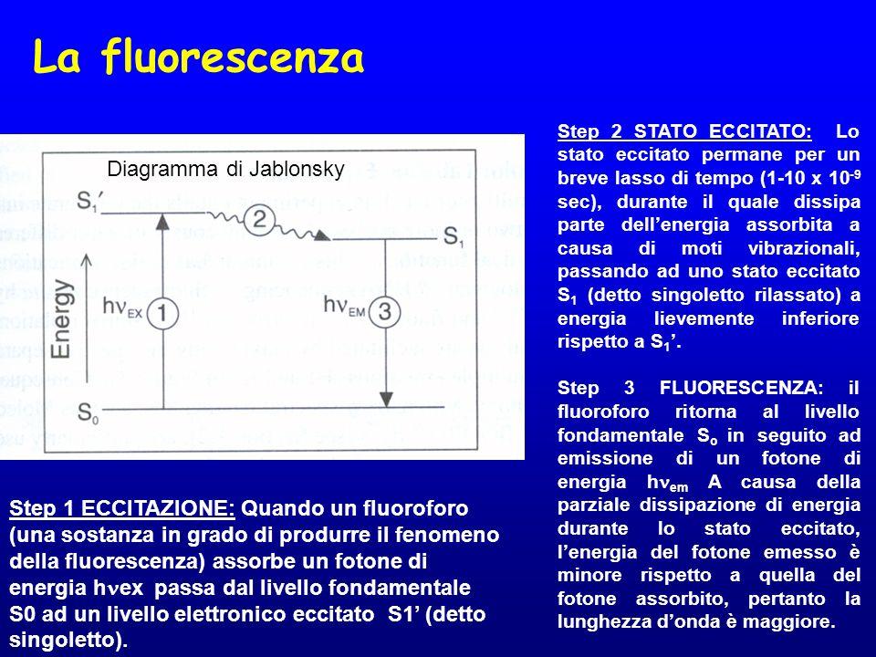 La fluorescenza Diagramma di Jablonsky