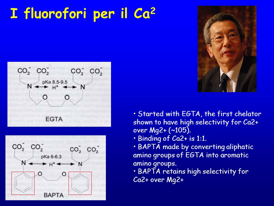 I fluorofori per il Ca2• Started with EGTA, the first chelator shown to have high selectivity for Ca2+ over Mg2+ (~105).
