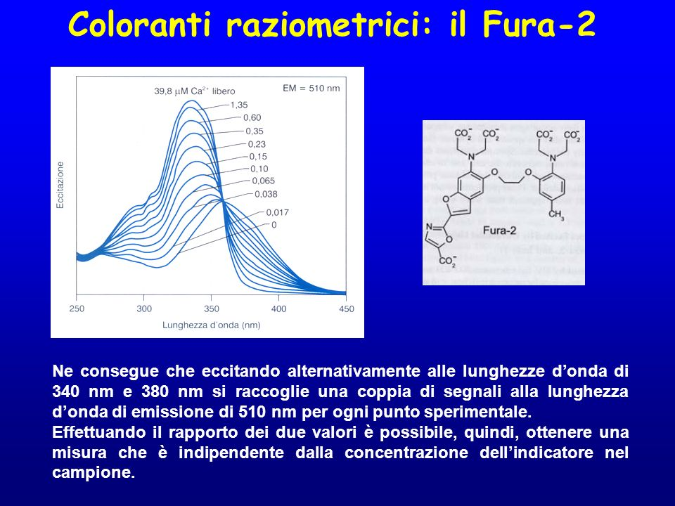 Coloranti raziometrici: il Fura-2
