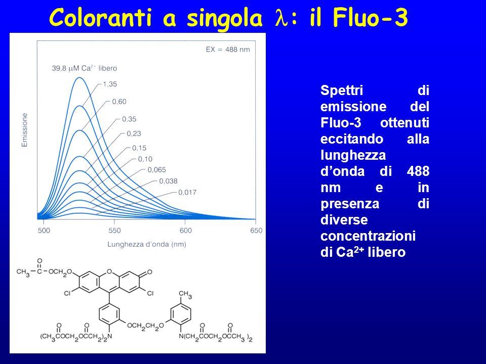 Coloranti a singola : il Fluo-3