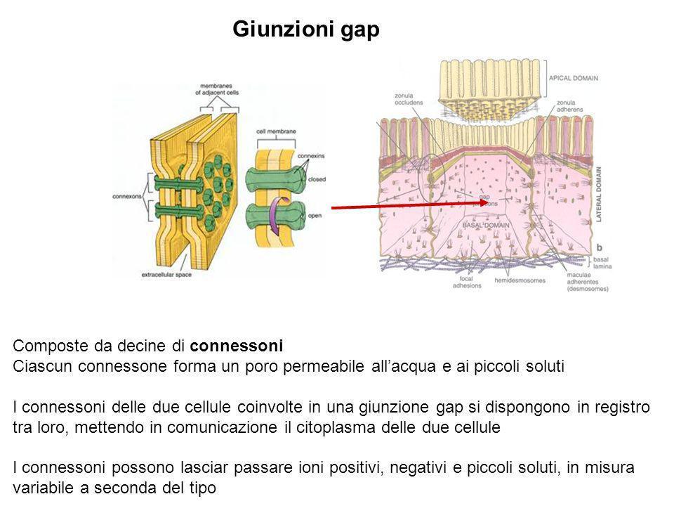 Giunzioni gap Composte da decine di connessoni