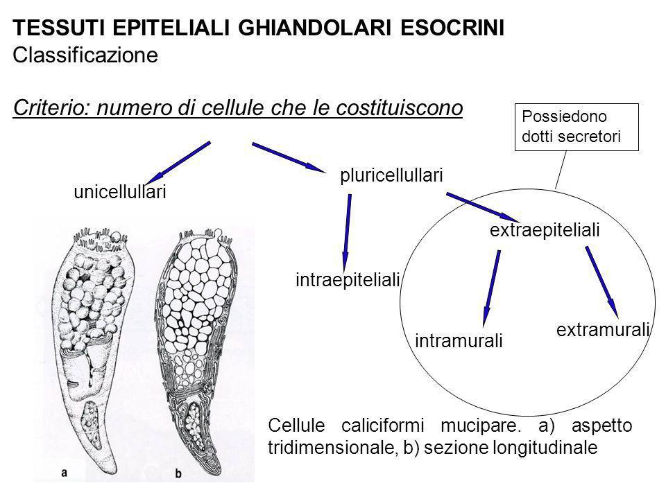 TESSUTI EPITELIALI GHIANDOLARI ESOCRINI Classificazione