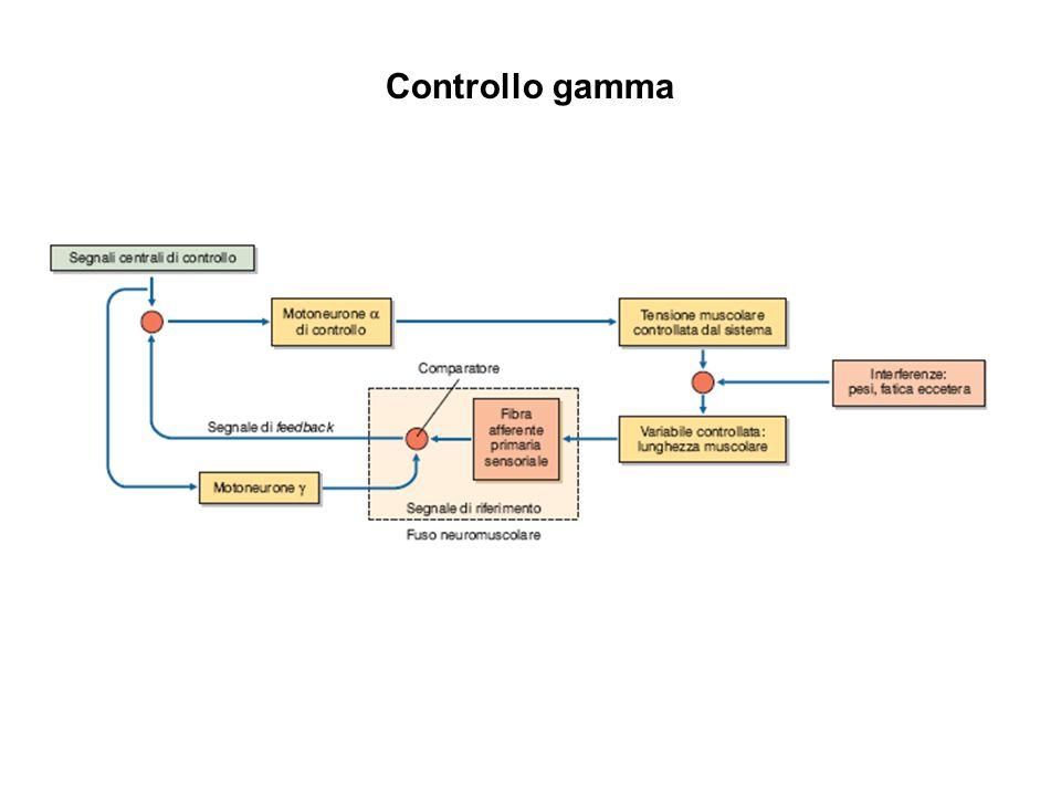 Controllo gamma