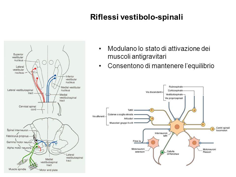 Riflessi vestibolo-spinali