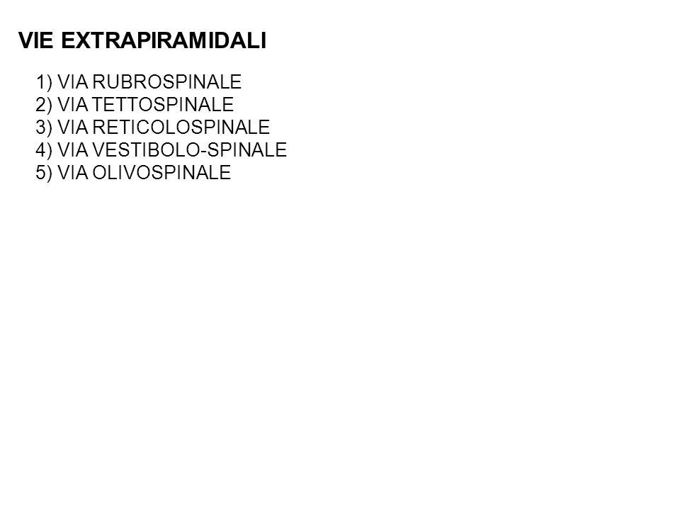 VIE EXTRAPIRAMIDALI 1) VIA RUBROSPINALE 2) VIA TETTOSPINALE