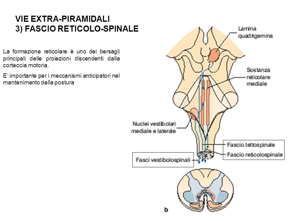 3) FASCIO RETICOLO-SPINALE
