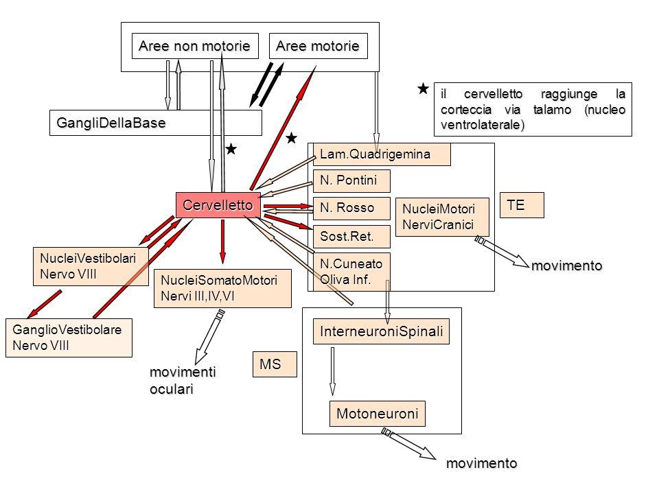 Aree non motorie Aree motorie GangliDellaBase Cervelletto TE movimento