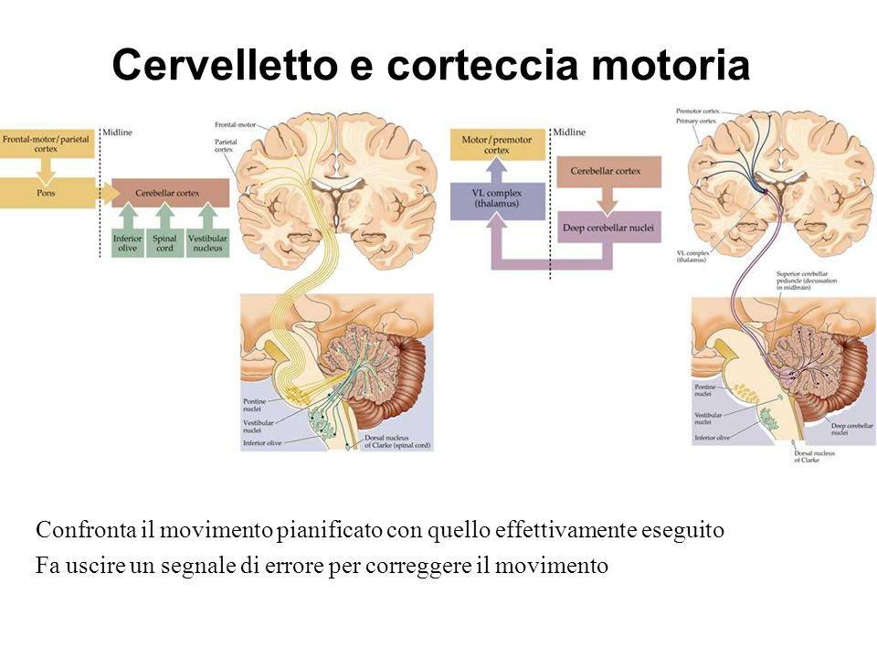 Cervelletto e corteccia motoria