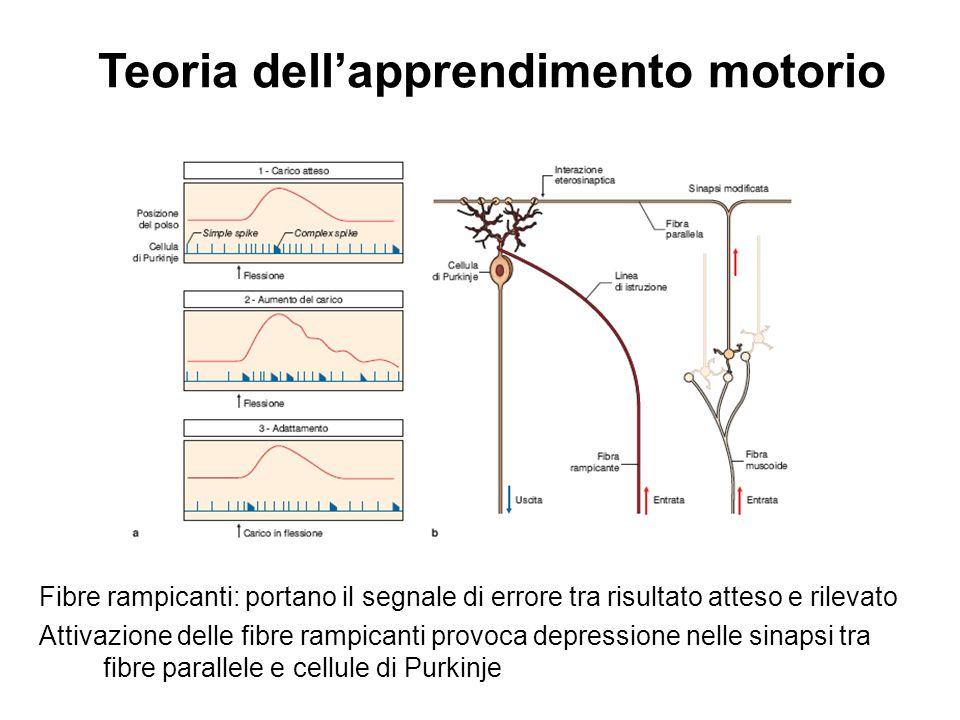 Teoria dell'apprendimento motorio