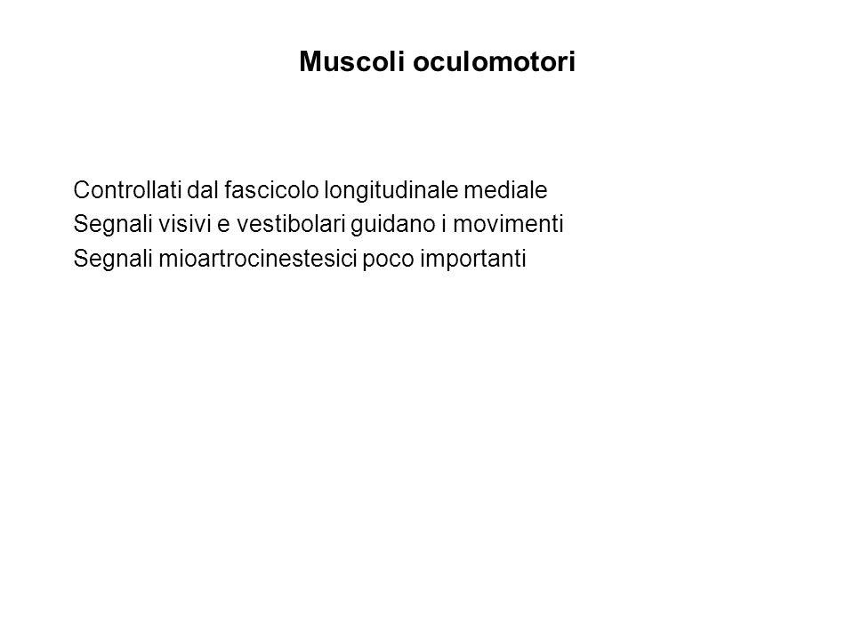 Muscoli oculomotori Controllati dal fascicolo longitudinale mediale