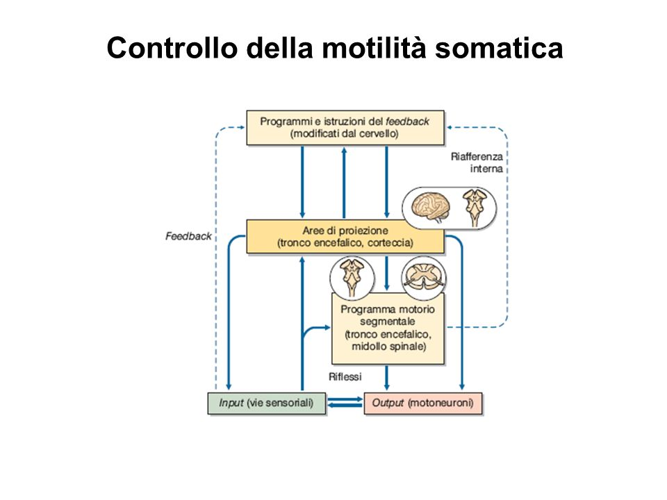 Controllo della motilità somatica
