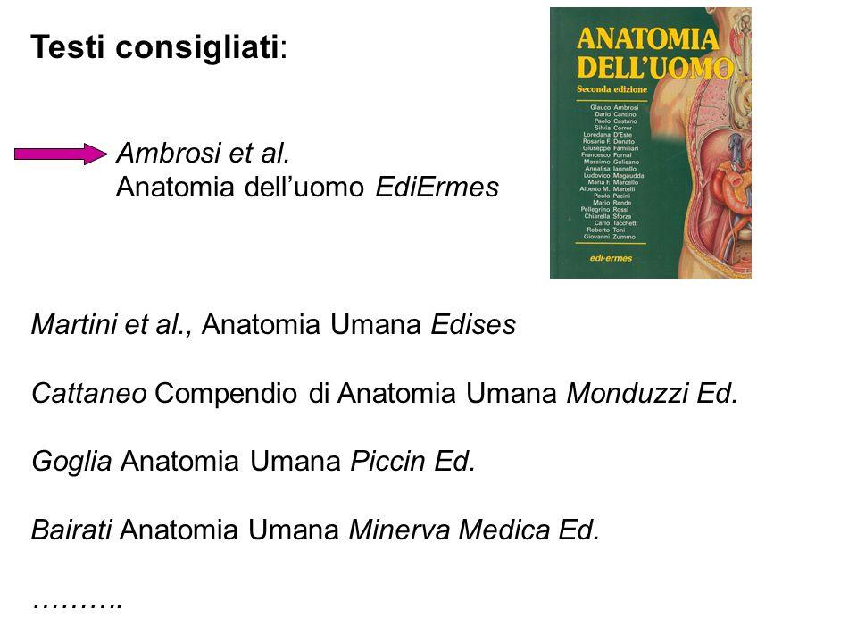 Testi consigliati: Ambrosi et al. Anatomia dell'uomo EdiErmes