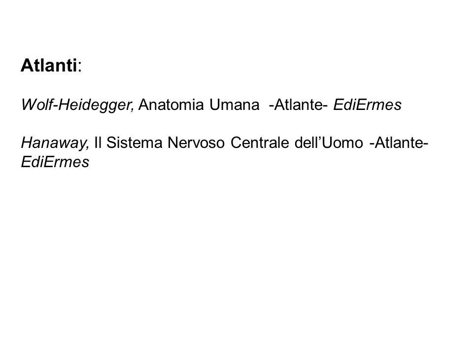 Atlanti: Wolf-Heidegger, Anatomia Umana -Atlante- EdiErmes