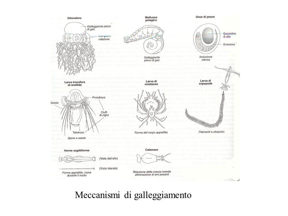 Meccanismi di galleggiamento