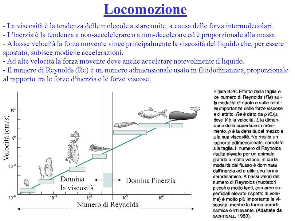 Locomozione- La viscosità è la tendenza delle molecole a stare unite, a causa delle forza intermolecolari.