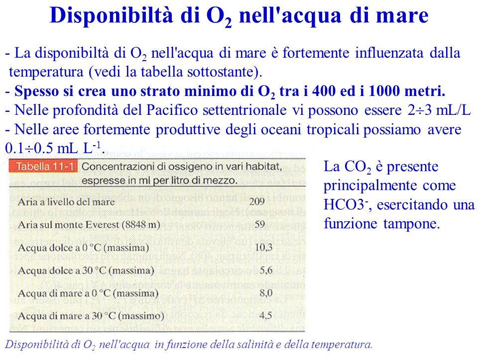 Disponibiltà di O2 nell acqua di mare