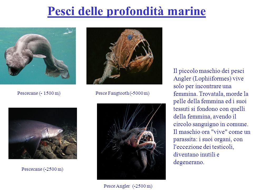 Pesci delle profondità marine
