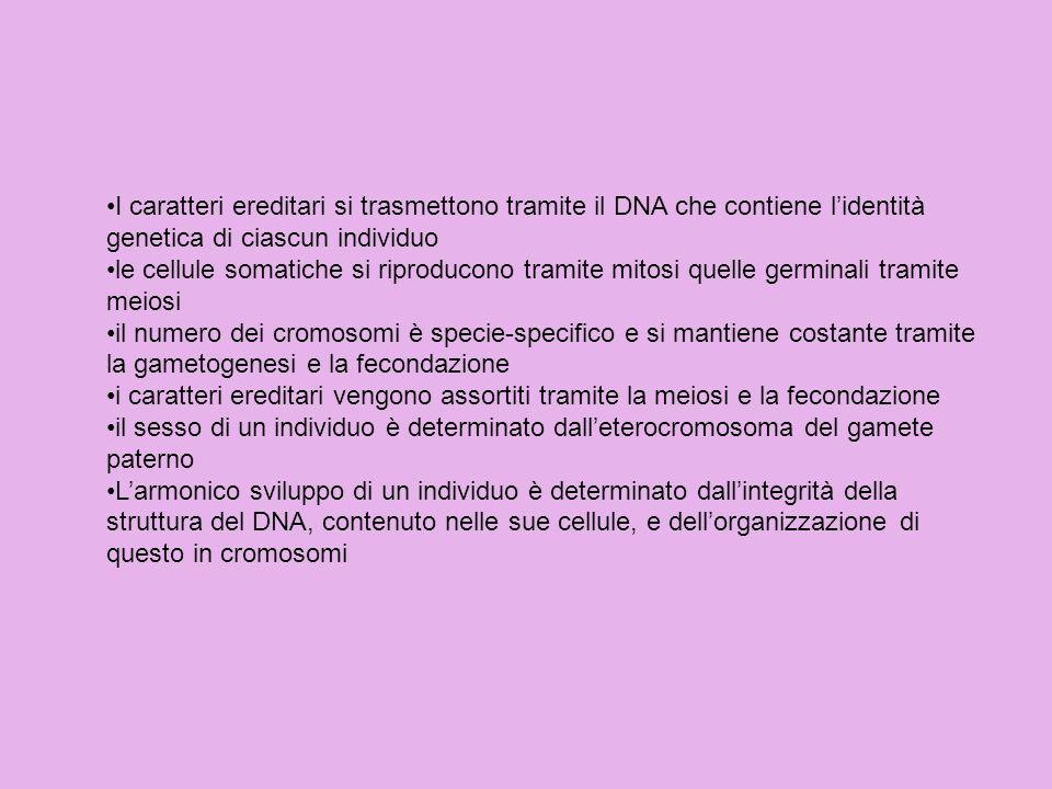 I caratteri ereditari si trasmettono tramite il DNA che contiene l'identità genetica di ciascun individuo