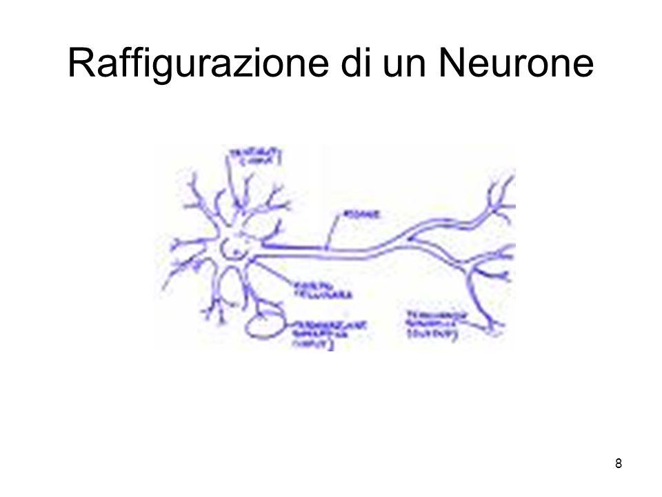 Raffigurazione di un Neurone