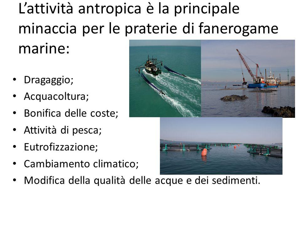 L'attività antropica è la principale minaccia per le praterie di fanerogame marine: