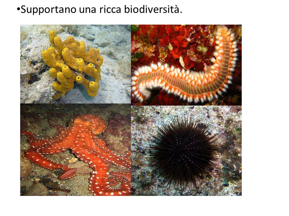 Supportano una ricca biodiversità.