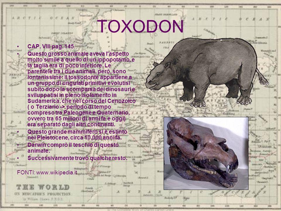 TOXODON CAP. VIII pag. 145.