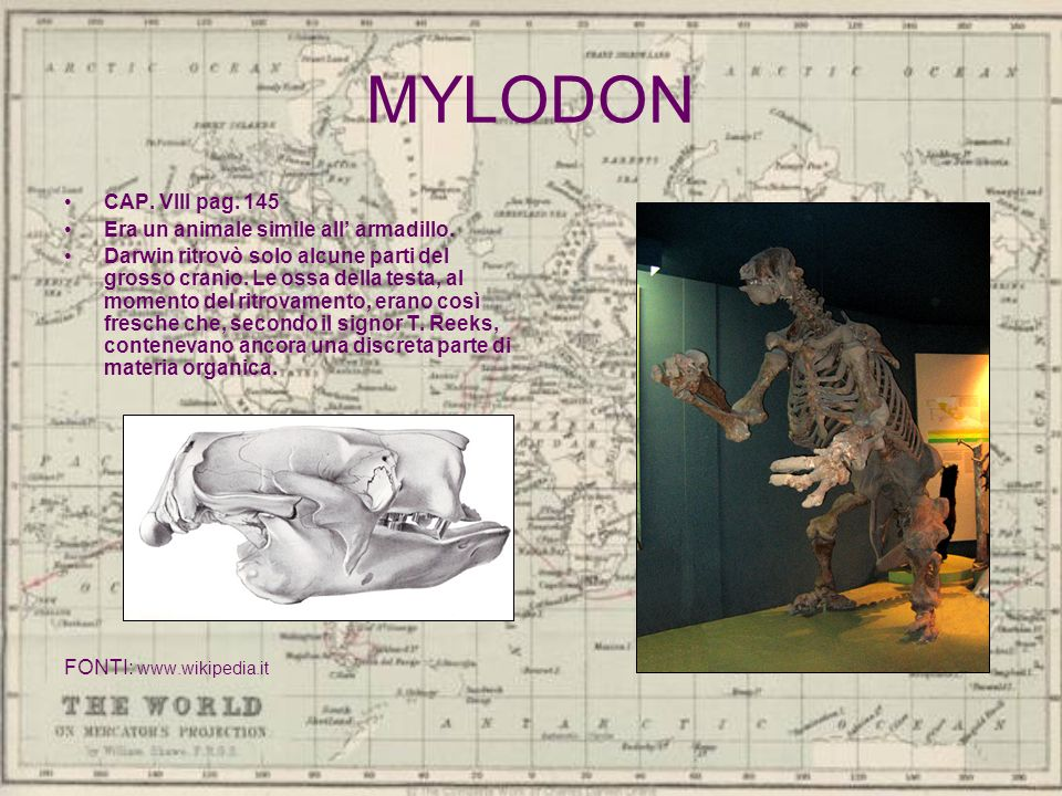 MYLODON CAP. VIII pag. 145 Era un animale simile all' armadillo.