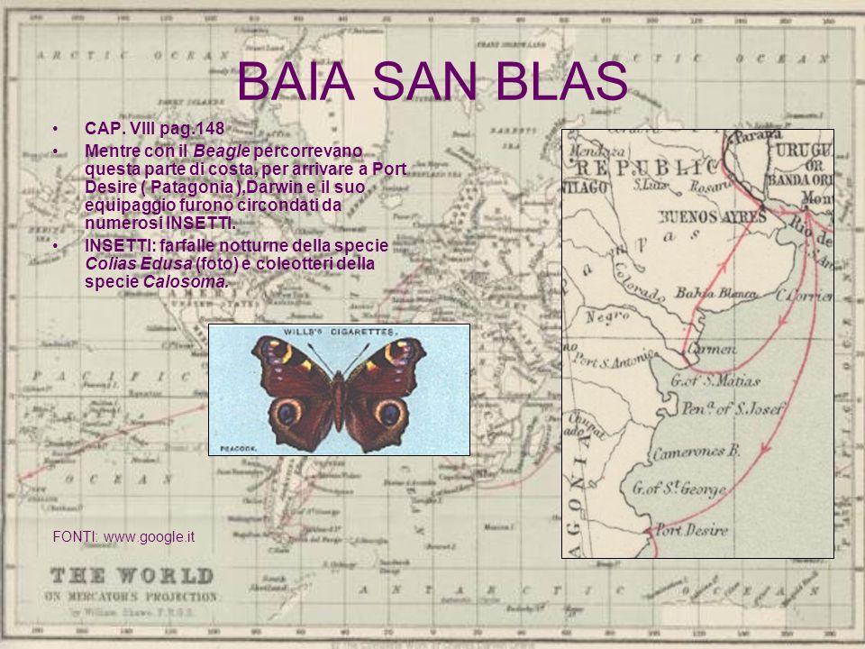 BAIA SAN BLAS CAP. VIII pag.148