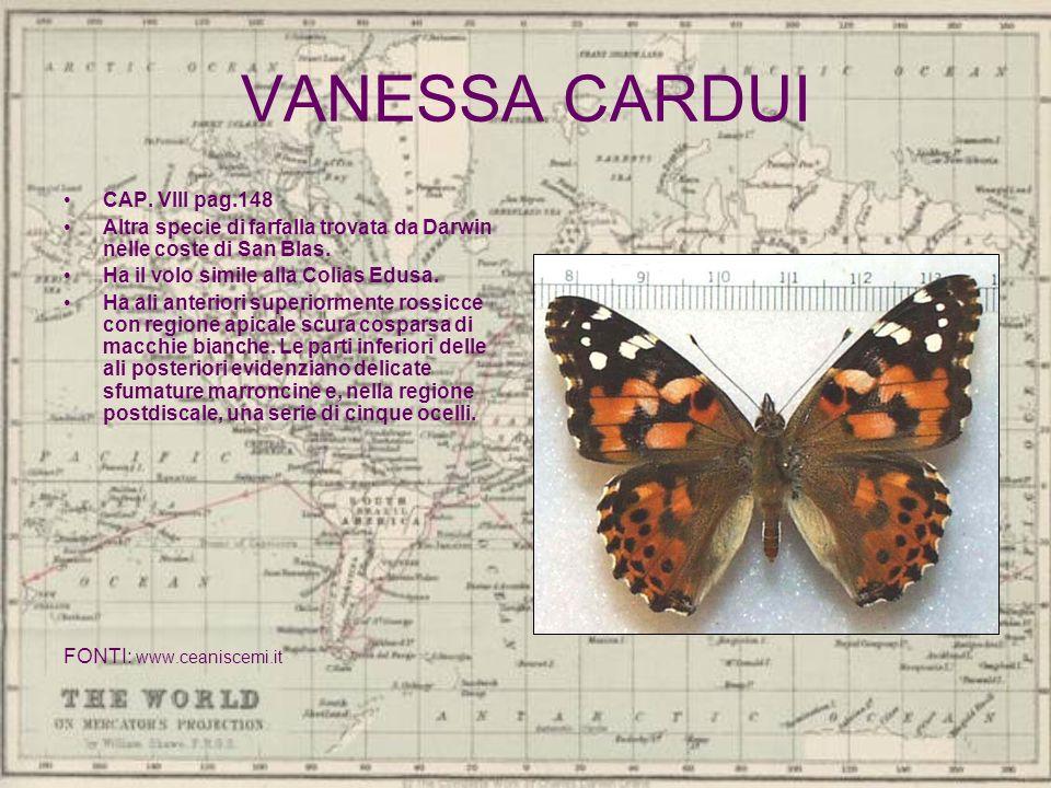 VANESSA CARDUI CAP. VIII pag.148