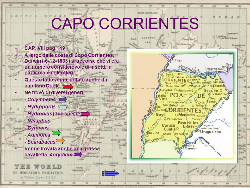 CAPO CORRIENTES CAP. VIII pag.149