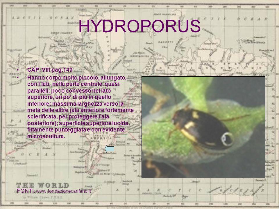 HYDROPORUS CAP. VIII pag.149