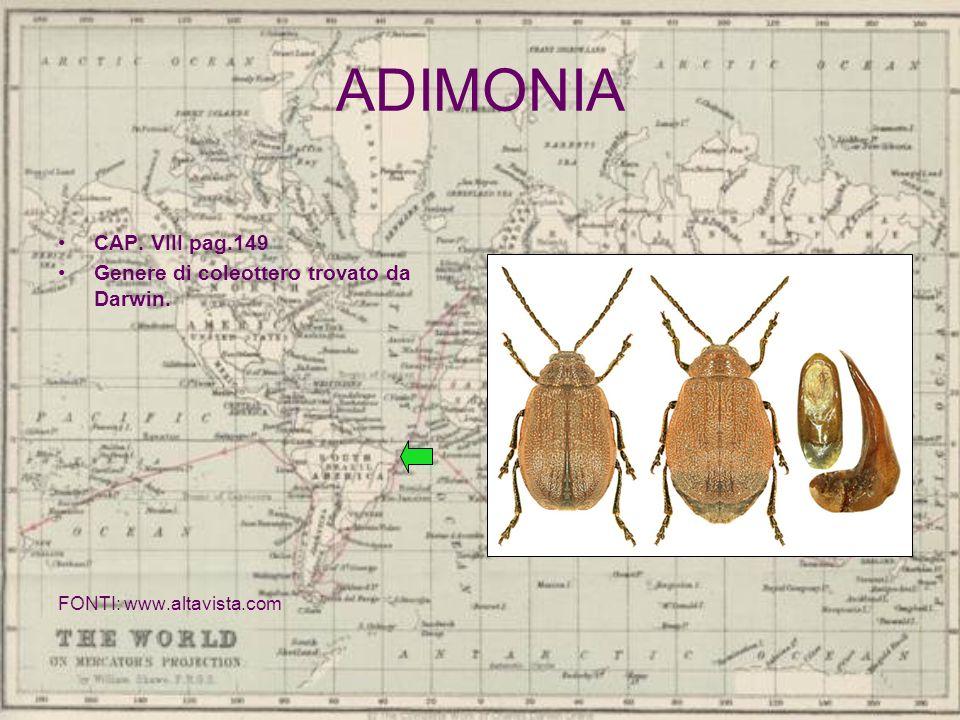 ADIMONIA CAP. VIII pag.149 Genere di coleottero trovato da Darwin.
