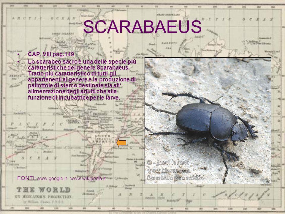 SCARABAEUS CAP. VIII pag.149