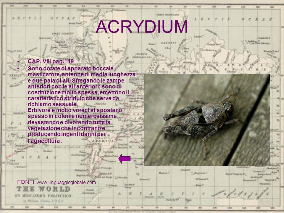ACRYDIUM CAP. VIII pag.149.