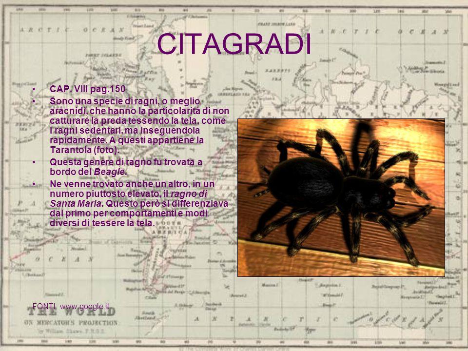 CITAGRADI CAP. VIII pag.150.