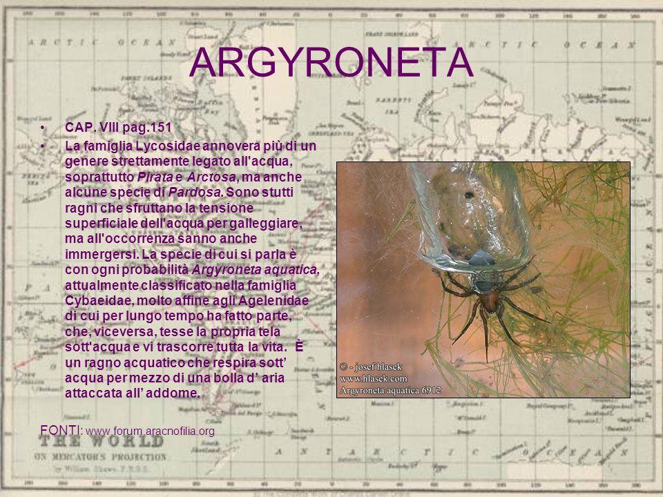 ARGYRONETA CAP. VIII pag.151