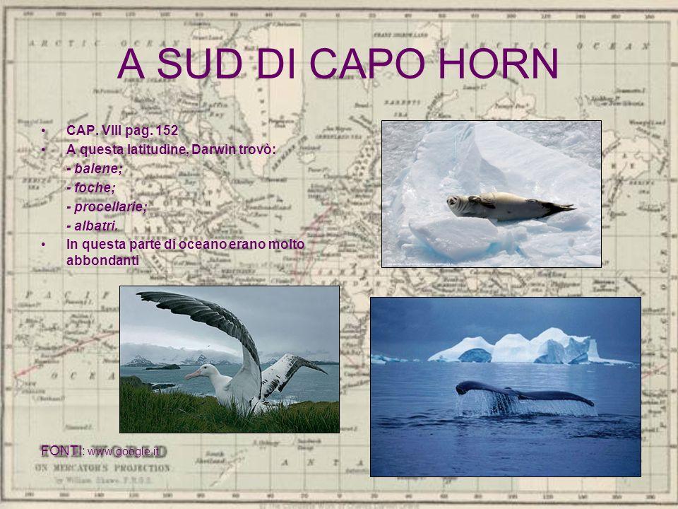 A SUD DI CAPO HORN CAP. VIII pag. 152