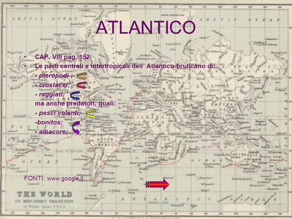 ATLANTICO CAP. VIII pag. 152. Le parti centrali e intertropicali dell' Atlantico brulicano di: - pteropodi ;