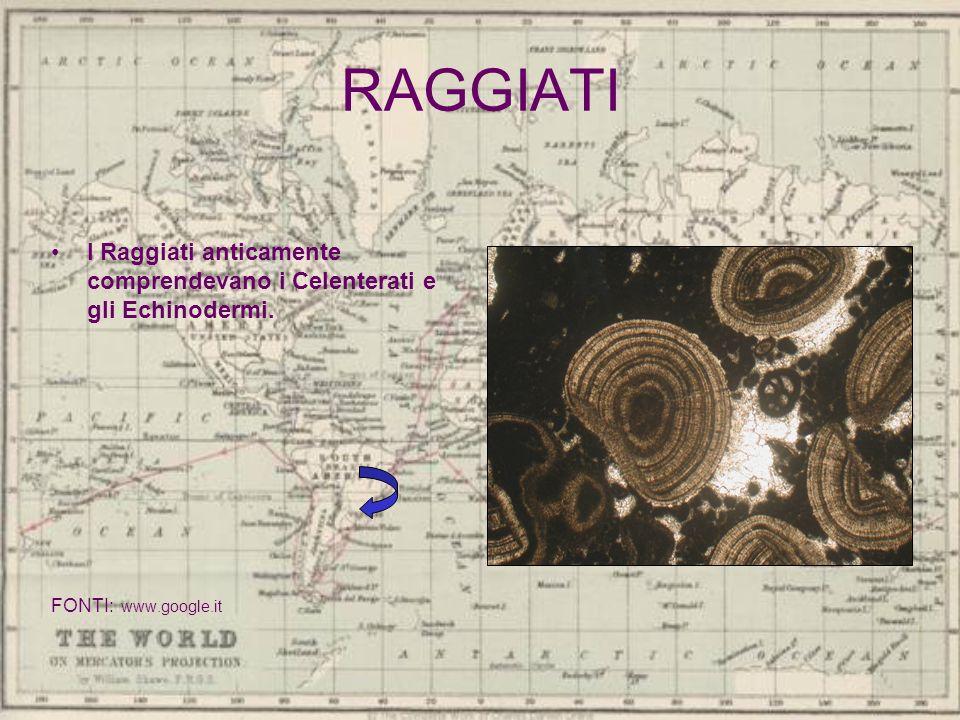 RAGGIATI I Raggiati anticamente comprendevano i Celenterati e gli Echinodermi. FONTI: www.google.it