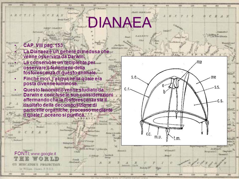 DIANAEA CAP. VIII pag. 153. La Dianaea è un genere di medusa che venne osservata da Darwin.