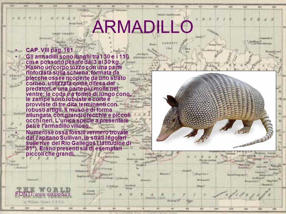 ARMADILLO CAP. VIII pag. 161.