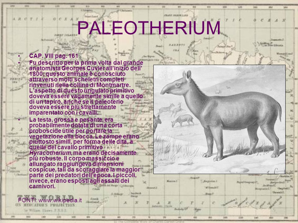 PALEOTHERIUM CAP. VIII pag. 161