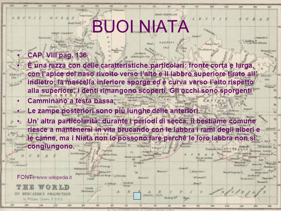 BUOI NIATA CAP. VIII pag. 136.
