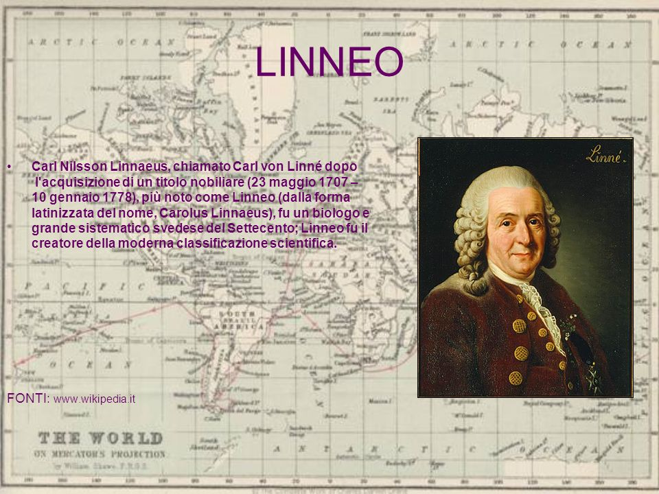 LINNEO Carl Nilsson Linnaeus, chiamato Carl von Linné dopo