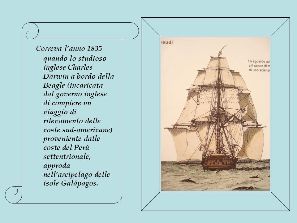Correva l'anno 1835 quando lo studioso inglese Charles Darwin a bordo della Beagle (incaricata dal governo inglese di compiere un viaggio di rilevamento delle coste sud-americane) proveniente dalle coste del Perù settentrionale, approda nell'arcipelago delle isole Galápagos.
