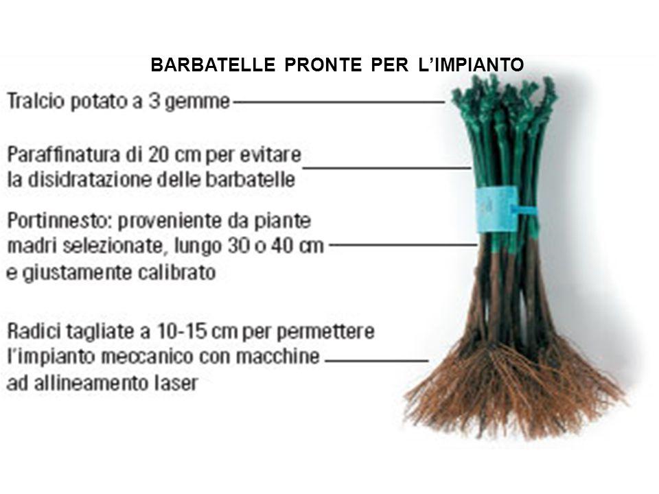 Prodotti e sottoprodotti della filiera vitivinicola