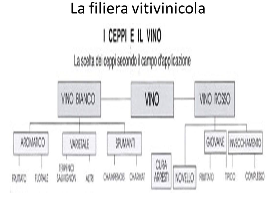 La filiera vitivinicola