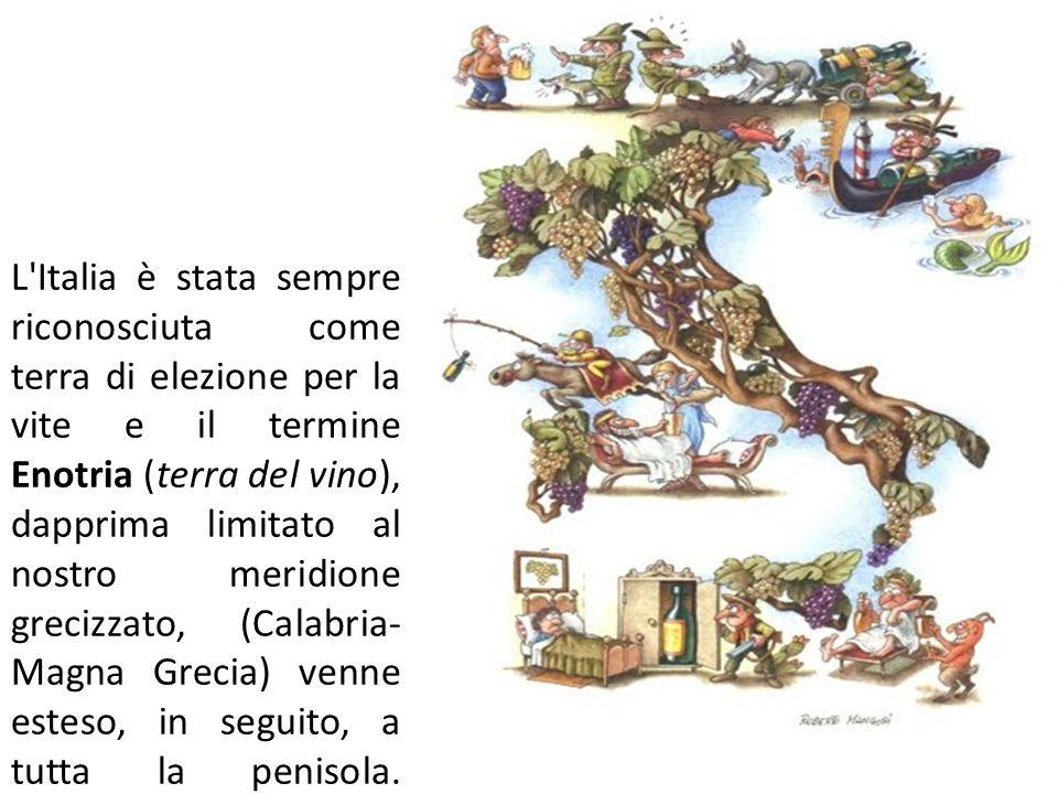 L Italia è stata sempre riconosciuta come terra di elezione per la vite e il termine Enotria (terra del vino), dapprima limitato al nostro meridione grecizzato, (Calabria- Magna Grecia) venne esteso, in seguito, a tutta la penisola.