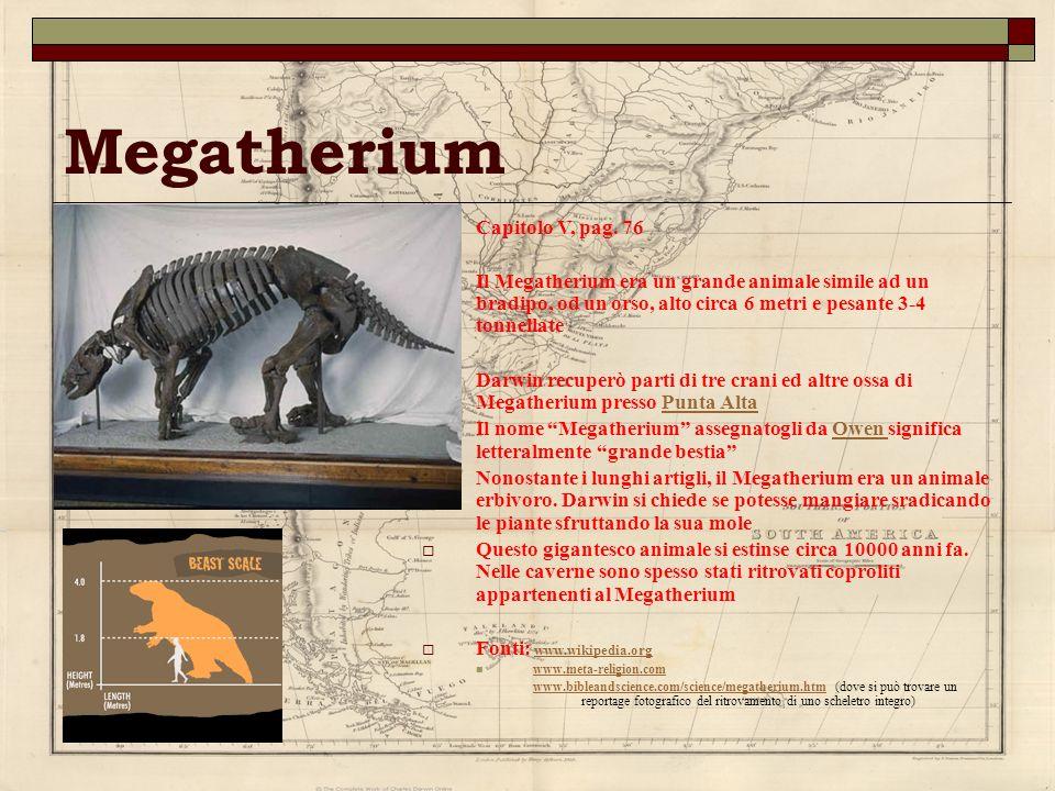 Megatherium Capitolo V, pag. 76