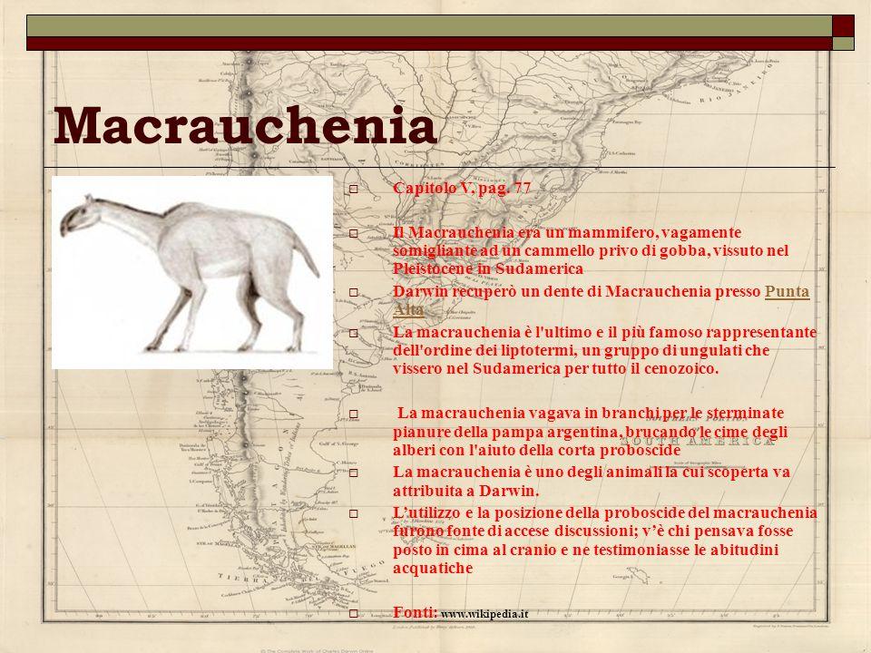 Macrauchenia Capitolo V, pag. 77